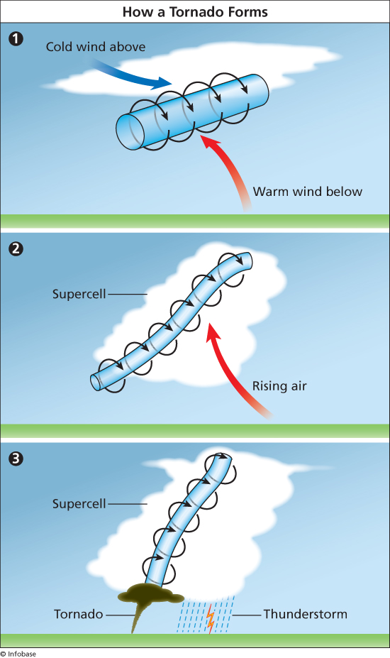"""""""How a Tornado Forms."""" The World Almanac for Kids, Infobase Learning, wak.infobaselearning.com/display-media.aspx?wid=19598&mid=32425"""